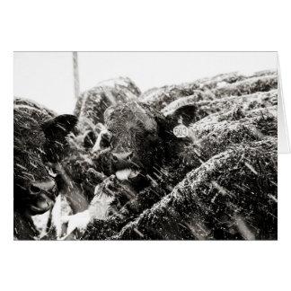 Schwarze u. weiße grüßende Kuh-anziehende Karte