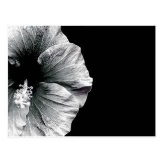 Schwarze u. weiße Hibiskus-Blumen-Fotografie Postkarte