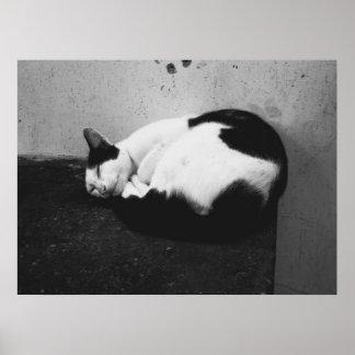 Schwarze u. weiße Katze Poster