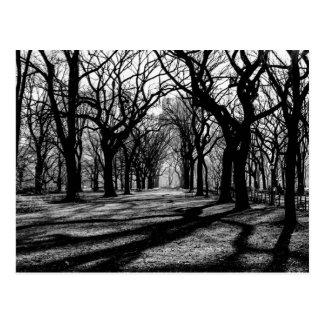 Schwarze u. weiße Landschaft im Central Park Postkarte