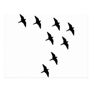 schwarze Vögel Postkarten