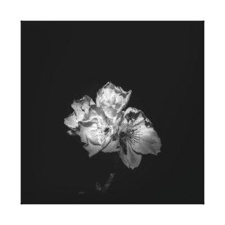 Schwärzen Sie ein weißes Blütensegeltuch Leinwanddruck