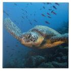 Schwärzen Sie (grüne) Schildkröte (Chelonia agassi Keramikfliese