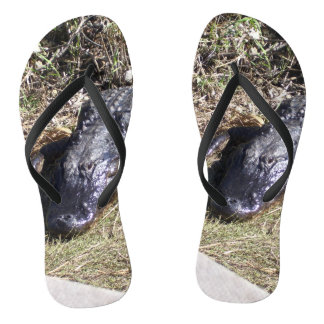 Schwarzer Alligator in den Sumpfgebieten Flip Flops