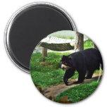 Schwarzer Bär Magnets