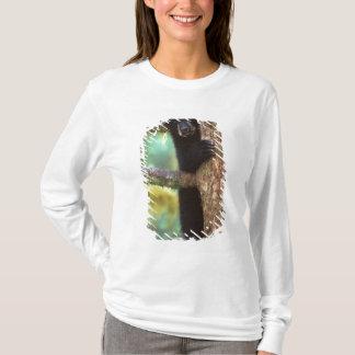 schwarzer Bär, Ursus americanus, Junges im Baum, T-Shirt