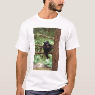 schwarzer Bär, Ursus americanus, Junges in einem T-Shirt