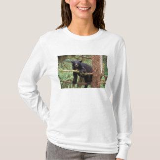 schwarzer Bär, Ursus americanus, Sau im Baum, Anan T-Shirt