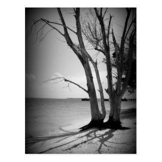 Schwarzer Baum durch das Meer Postkarte