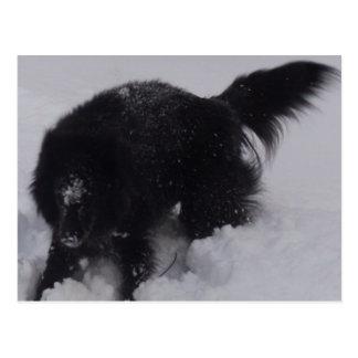 Schwarzer belgischer Schäfer im Schnee Postkarte