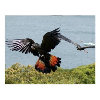 Schwarzer Cockatoo herein für die Landung Postkarte