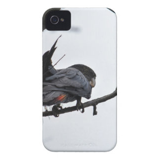 SCHWARZER COCKATOO QUEENSLAND AUSTRALIEN Case-Mate iPhone 4 HÜLLEN