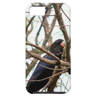 SCHWARZER COCKATOO QUEENSLAND AUSTRALIEN iPhone 5 SCHUTZHÜLLE
