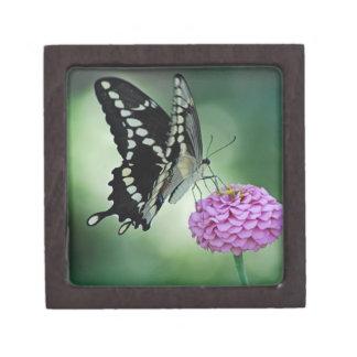 Schwarzer Frack-Schmetterling auf einer rosa Blume Kiste