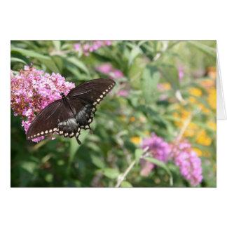 Schwarzer Frack-Schmetterling auf Schmetterling Karte