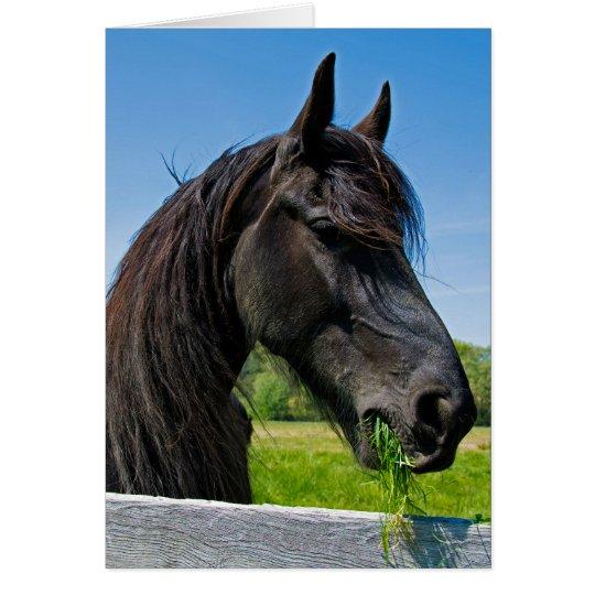 schwarzer friesischer Pferdegeburtstag Grußkarte