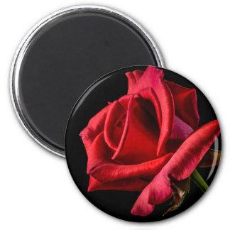 Schwarzer Hintergrund der Roten Rose Runder Magnet 5,1 Cm