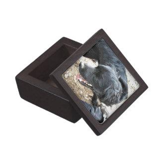 Schwarzer Labrador, der mit Schuhen spielt Schmuckkiste
