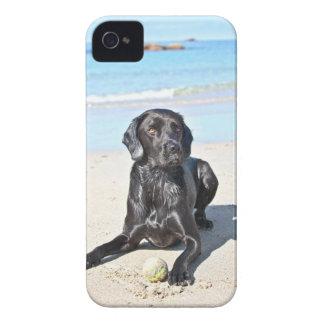Schwarzer Labrador-Hund, der auf dem Strand sitzt Case-Mate iPhone 4 Hüllen