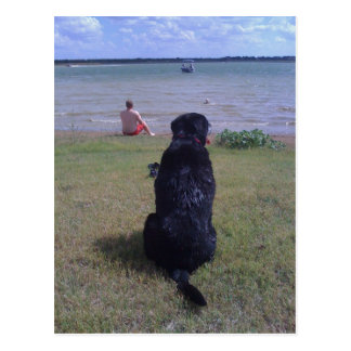 Schwarzer Labrador in See Postkarte