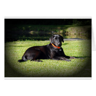 Schwarzer Labrador Karte