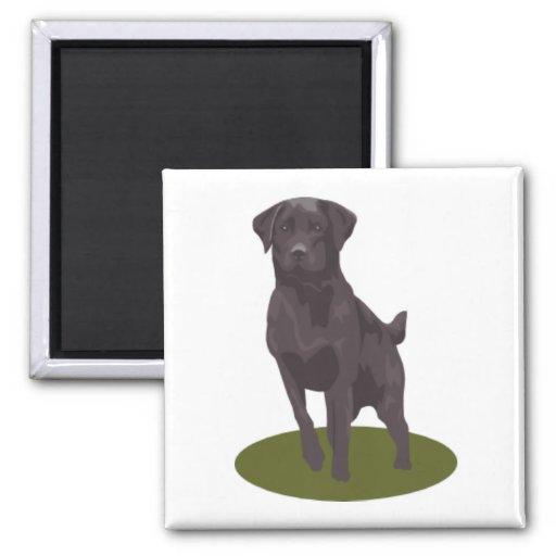 Schwarzer Labrador Magnets