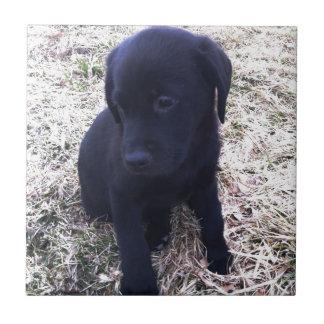 Schwarzer Labrador retriever-Welpe Fliese
