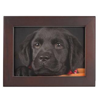 Schwarzer labrador retriever-Welpe in einem Korb Erinnerungsdose