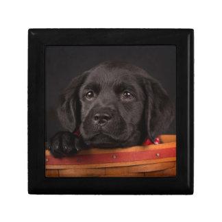 Schwarzer labrador retriever-Welpe in einem Korb Erinnerungskiste