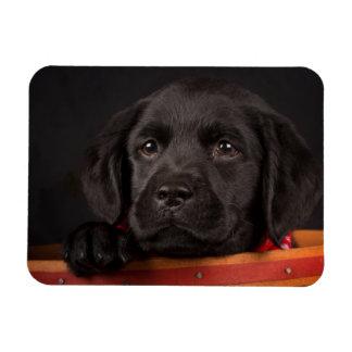 Schwarzer labrador retriever-Welpe in einem Korb Magnet