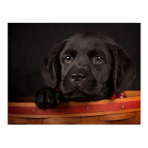 Schwarzer labrador retriever-Welpe in einem Korb Postkarten