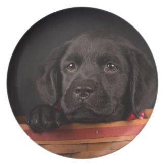 Schwarzer labrador retriever-Welpe in einem Korb Teller