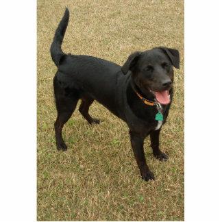 Schwarzer Labrador-Therapie-Hund Freistehende Fotoskulptur