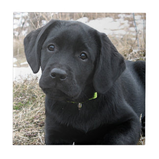 Schwarzer Labrador-Welpe - Vorfrühling-Jagd Keramikfliese