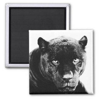 Schwarzer Panther Jaguar Kühlschrankmagnete