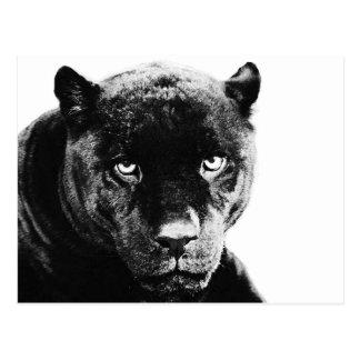 Schwarzer Panther Jaguar Postkarte