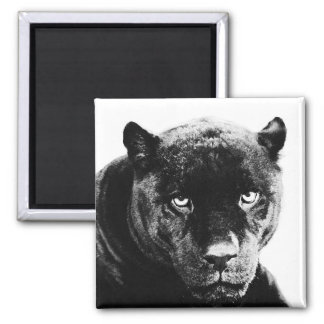 Schwarzer Panther Jaguar Quadratischer Magnet