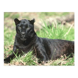 Schwarzer Panther Postkarte