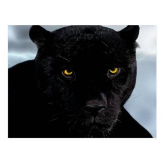 Schwarzer PantherPanthera Postkarten
