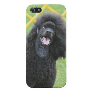 Schwarzer Pudel iPhone 5 Hüllen