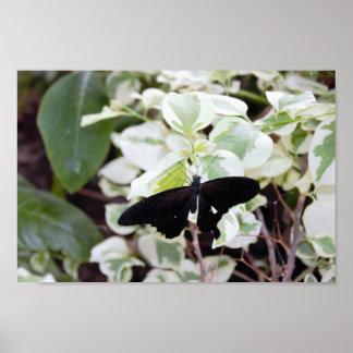 Schwarzer Schmetterling auf Pflanze Poster