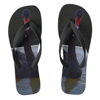 Schwarzer Schwan-Schwimmen im Maßteich, Flip Flops