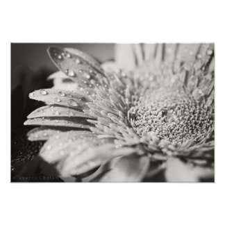 Schwarzer u. weißer Blumen-u. Tröpfchen-Foto-Druck Fotodruck