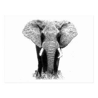 Schwarzer u. weißer Elefant Postkarte