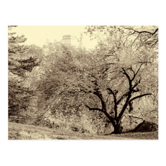 Schwarzer u. weißer Landschaftswinter-Baum in der Postkarte
