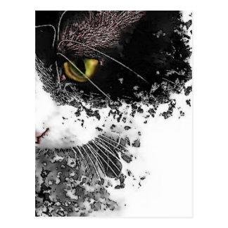 Schwarzer u. weißer Pussycat Postkarte