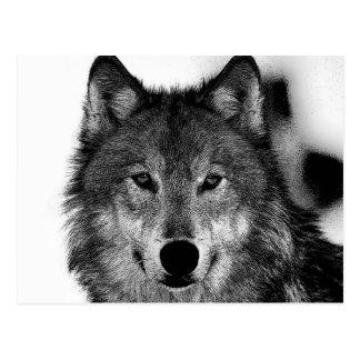 Schwarzer u. weißer Wolf-Grafik Postkarte