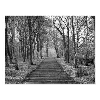 Schwarzer/weißer Wald Postkarte