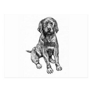Schwarzer Welpen-Labrador Postkarte