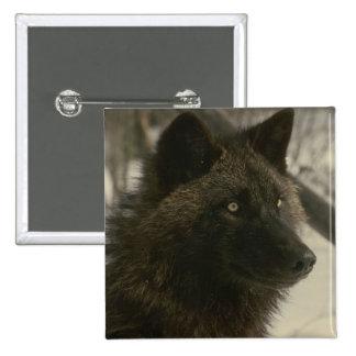 Schwarzer Wolf Quadratischer Button 5,1 Cm